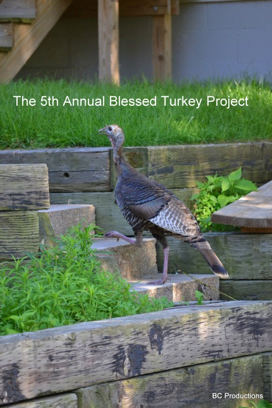 The Blessed Turkey Project Year 5!